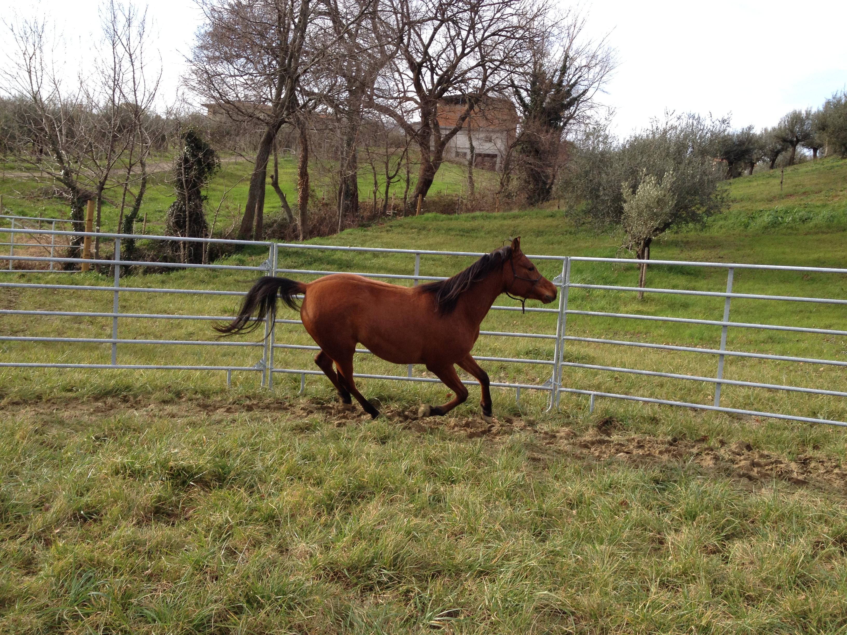 Tondino Per Cavalli.Tondino Per Cavalli